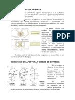 Estructura de Los Estomas