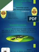entomologia agricola.pptx