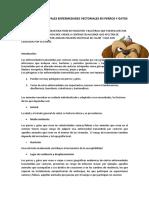 PRINCIPALES+ENFERMEDADES+VECTORIALES+EN+PERROS+Y+GATOS