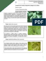 Guia de Evaluacion de Plagas en Citricos