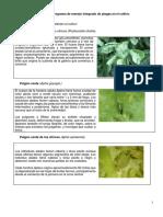 Programa de Manejo Integrado de Plagas en El Cultivo