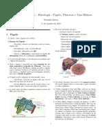 Histologia Do Fígado, Pâncreas e Vias Biliares