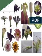 Botanica Fotos 5