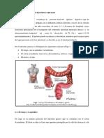 Anatomia Del Intestino Grueso