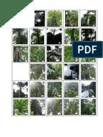 132627_dendrologi.pdf