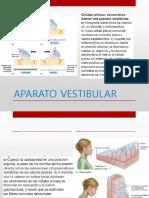 Fisiología Del Sistema Nervioso 2.3