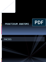 PRAKTIKUM ANATOMI.pptx