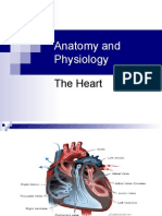 Anatomy and Physiology the heart