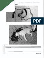 Atestado sobre la muerte de la perra 'Sota' en Barcelona