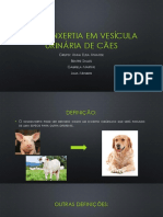 Xenoenxertia Em Vesícula Urinária de Cães