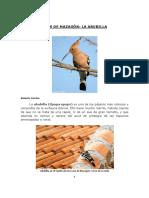 Aves de Mazagón - La Abubilla