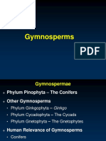 Kuliah 5. Gymnospermae