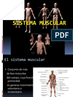 22933630 Sistema Muscular