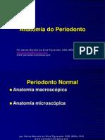 Aula1Anatomia