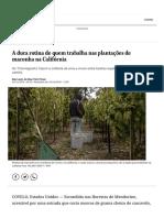 A Dura Rotina de Quem Trabalha Nas Plantações de Maconha Na Califórnia - Jornal O Globo