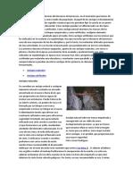ANCLAJES Dentro de las técnicas del descenso de barrancos.docx