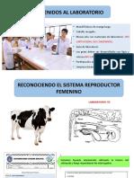 7MA SEMANA LABORATORIO ARF.pptx