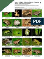 1077 Venezuela Amphibians and Reptiles of Guaquira