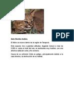 Animales en Peligro de Extinciòn