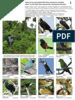 1084 Ecuador Birds of the Kichwa Chakra at the Alto Tena Community 0