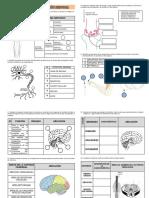 Practica Sistema Nervioso