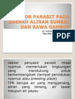 Vektor Parasit Pada Daerah Aliran Sungai Dan