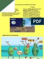 PPT 3ª Unidad, clase 3, Fase Oscura y Factores de la Fotosíntesis