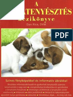 Hogyan etessük a kutyákat? | Vasárnap | Családi magazin és portál