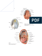 Anatomi Gastro