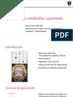 Neurofisiologia - Corteza y Funciones Superiores (1)