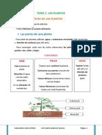 Tema 1 Las Plantas