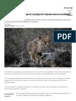 Tres Leones de Una Subespecie en Peligro de Extinción Mueren Arrollados en India _ Blog Mundo Animal _ EL PAÍS