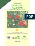 Budidaya Tanaman Rambutan