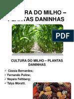 plantas daninhas na cultura da cana de açucar
