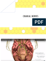 Cranial Nerve Nadz Final