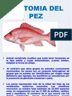 ANATOMIA DEL PEZ-.pptx