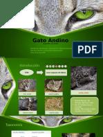 Conservación Del GATO ANDINO