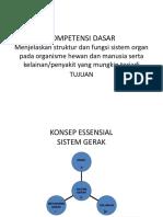 Presentation Alat Gerak