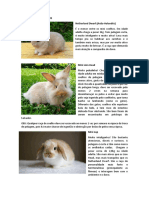 Raças de mini coelhos