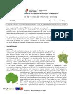 Ficha de trabalho 4 castas RDVV.pdf
