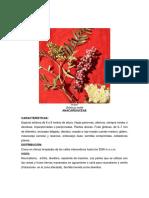 Plantas Medicinales Prov. Huamanga 2017