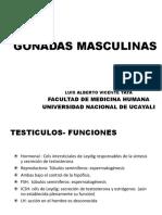 GONADAS MASCULINAS