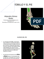 EL-TOBILLO-Y-EL-PIE anatomia