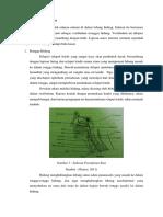 Anatomi Saluran pernafasan
