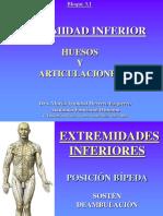 Miembro Inferior Huesos y Articulaciones