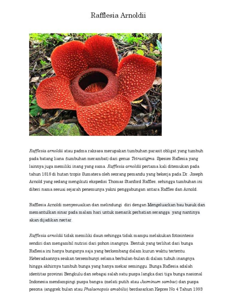 Unduh 550 Gambar Bunga Raflesia Dan Penjelasannya HD Terbaik