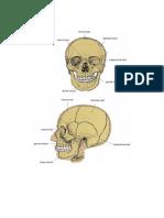 3 Kosti Glave