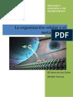 La Organización Celular y el metabolismo