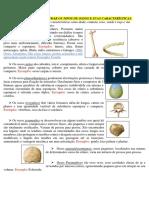 Resumo P1M5 imprimir.pdf
