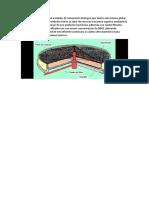 Los filtros percoladores son unidades de tratamiento biológico que dentro del sistema global de tratamiento de aguas residuales tienen la labor de remover la materia orgánica mediante la metabolización de está a cargo de un.docx